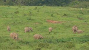 Elefanten auf der Kui Buri Safari in natürlicher Umgebung, ein Spaß für die gesamte Familie beim Urlaub mit Kindern in Thailand