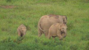 3 Elefanten im Kui Buri Elefanten Park 280 km vor Bangkok