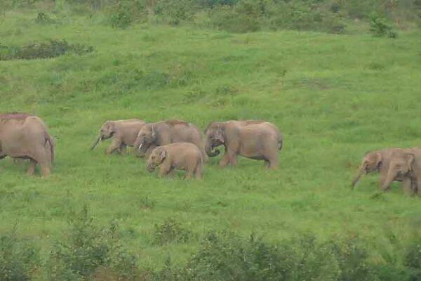 Kui Buri Elefanten beim grasen im Kui Buri National Park