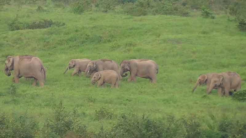 Elefantensafari Thailand