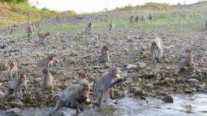 Affen im Kaeng Krachan Park die Sie auf der Safari durch den Park sehen werden