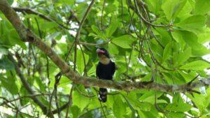 Die Kaeng Krachan Safari ist ein Paradies für Vogelkundler