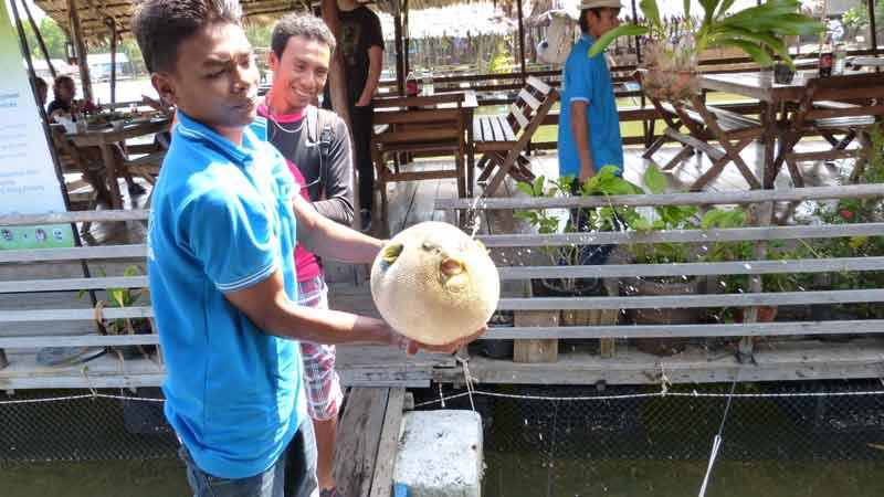 stolzer Koh Klang Fischer mit seinem Kugelfisch