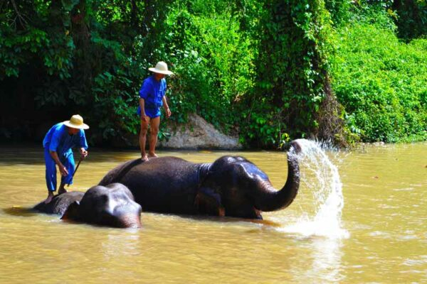 Elefantenbad im Elephant Conservation Center bei Lampang