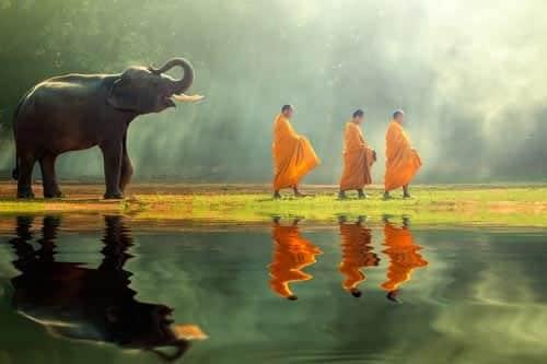 Reise Elefantenfest Surin