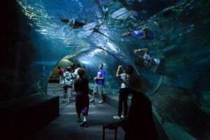 Ein Bild aus dem Siam Ocean World vor einem Aquarium