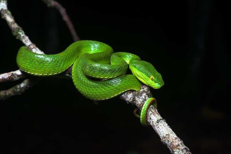 Gefährliche Schlangen