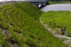 Beispiel zur Nutzung des Vetiver Gras