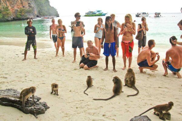 Affen Koh Phi Phi Inselhopping Thailand