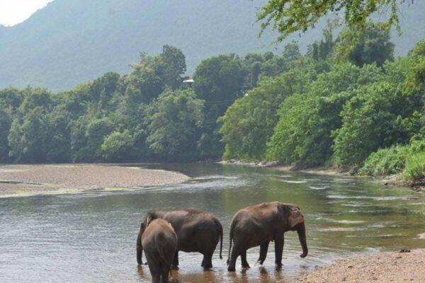 Elephants World Kanchanaburi, River Kwai, Thailand