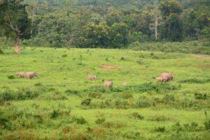 Kuiburi Nationalpark Südthailand Rundreise