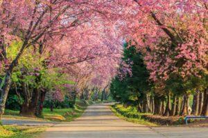 Chiang Rai Rundreise Nordthailand Kirchblüte