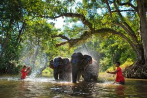 Die Elefanten des Chiang Dao Elefantencamps, Goldenes Dreieck Rundreise