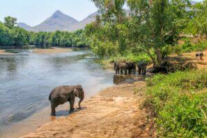 Elephants World Kanchanaburi Rundreise