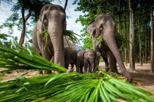 thailand anfänger preiswert, Elefantensafari Chiang Mai,