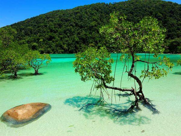 Der heutige Tag führt Sie je nach Wunsch zu den Surin oder Similan Inseln.