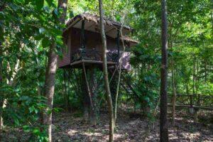 Baumhaus im Khao Sok Nationalpark