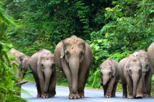 Elefanten im Khao Yai Nationalpark, Familienurlaub Thailand