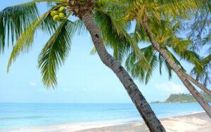 Palmen am Strand von Koh Chang, Familienurlaub Thailand