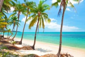 tropischer Strand mit Kokosnusspalmen auf der Insel Koh Samui.
